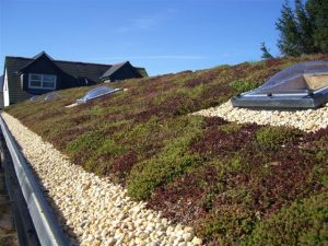 Green roofing in Kent