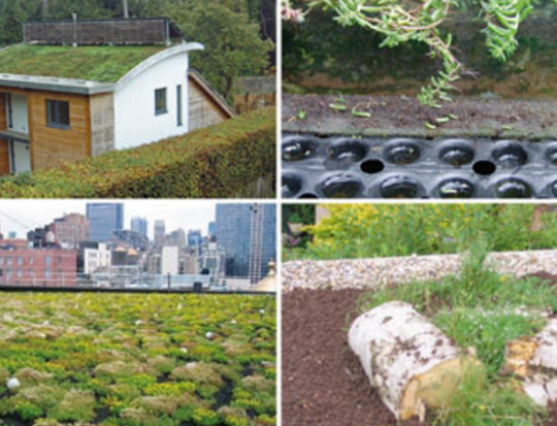 Have You Been Planning a Green Roof Project in Kent?